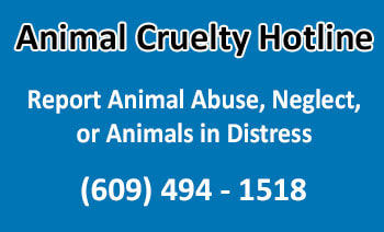 animal-cruelty-hotline